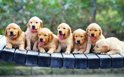 Puppy wallpaper ·① Download free cool backgrounds for desktop, mobile, laptop in any resolution ...