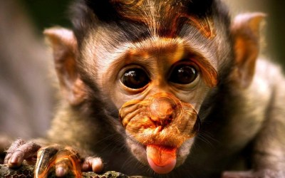 Monkey Funny Wallpaper ·① WallpaperTag