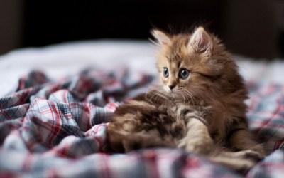 Funny Kittens Wallpaper ·① WallpaperTag