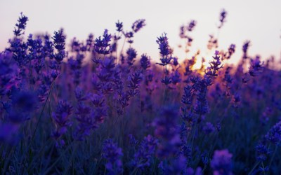 Lavender background ·① Download free cool High Resolution wallpapers for desktop, mobile, laptop ...