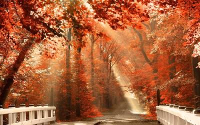 Autumn Desktop Wallpapers Backgrounds ·①