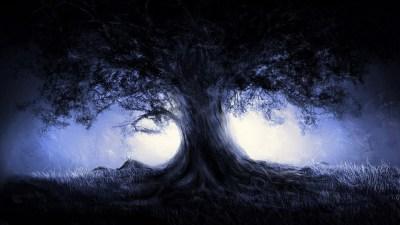 Dark Forest Wallpapers ·①