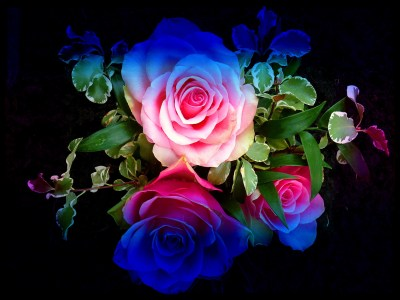 Rainbow Roses Background ·①