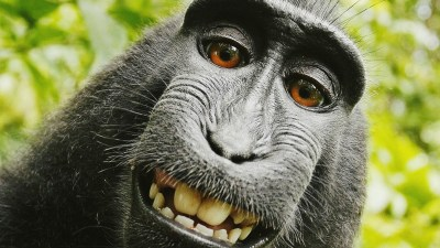 Funny Monkey Wallpaper ·①