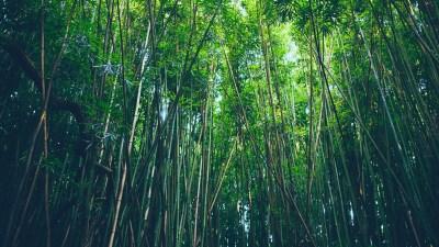 Bamboo Desktop Wallpaper ·①