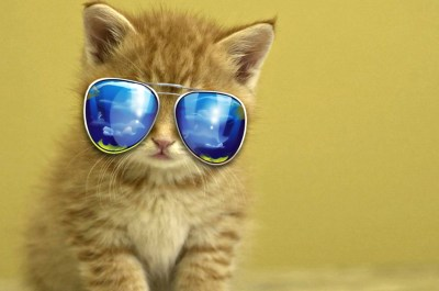 Cool Animals Wallpapers ·①
