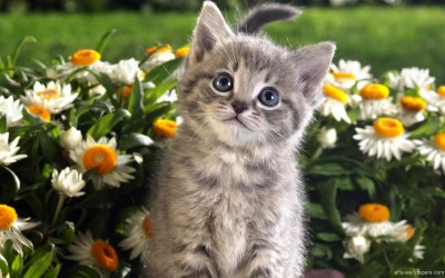 Kittens wallpaper ·① Download free stunning full HD wallpapers for desktop and mobile devices in ...