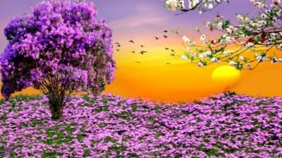 Spring Scenes Wallpaper ·① WallpaperTag