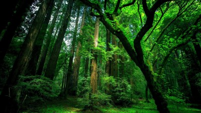 HD Forest wallpaper ·① Download free High Resolution backgrounds for desktop, mobile, laptop in ...