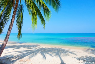 Palm Tree background ·① Download free HD backgrounds for desktop and mobile devices in any ...