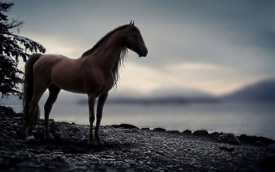 Horse Wallpapers ·①