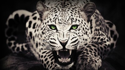 47+ Cool Animal wallpapers ·① Download free beautiful High Resolution backgrounds for desktop ...