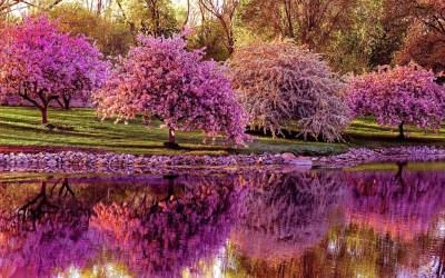 45+ Spring desktop backgrounds ·① Download free amazing backgrounds for desktop and mobile ...