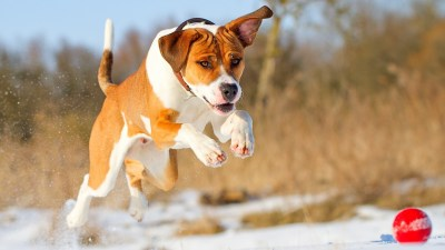 54+ Dog backgrounds ·① Download free amazing wallpapers of Dogs for desktop and mobile devices ...