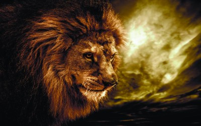 Fire Lion Wallpapers ·① WallpaperTag