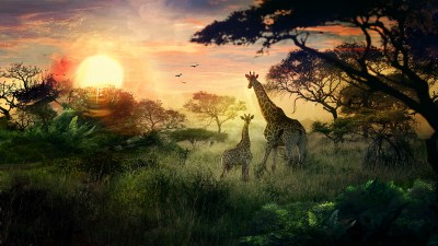 animals, Giraffes, Landscape, Sun, DeviantArt, Nature Wallpapers HD / Desktop and Mobile Backgrounds