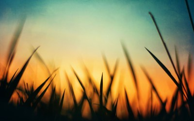 grass, Sunset Wallpapers HD / Desktop and Mobile Backgrounds