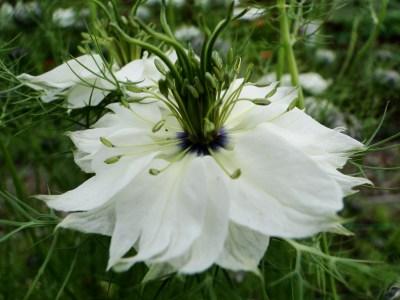 cut flower patch | wellywoman