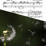 """Fragile"" – Sheet Music Download"