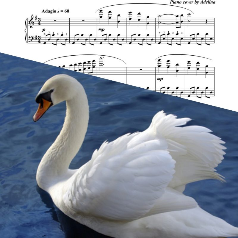 """The Swan"" – Saint Saens – Piano Sheet Music"