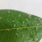 Bichitos en las Hojas de las Plantas: ¿Qué son?