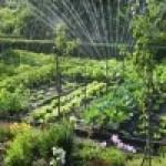 7 Hortalizas para cultivar en verano