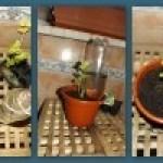 RIEGO EN VACACIONES|Tres sistemas sencillos y baratos
