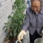 Agricultura urbana en China ?por qu? es necesaria?