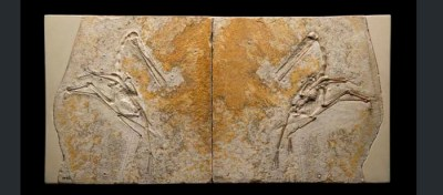 Why are Pterosaur Fossils Rare?