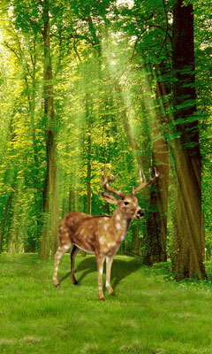 Forest in Deer LiveWallpaper Android App APK by fun and full