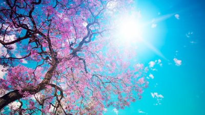 46 HD and QHD wallpapers of gorgeous trees (Round 2) | AndroidGuys