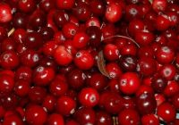 cranberries veenbessen