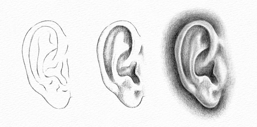 Pencil Portraits   How to Draw an Ear How to Draw an Ear