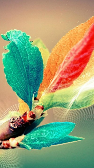 Colorful Leaves Wallpapers - 720x1280 - 306625