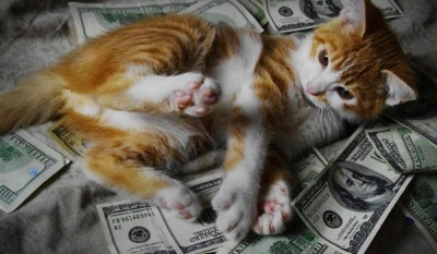 10 Cats Rolling Around in Cash - Catster