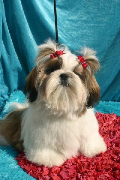 James bond From Audrey's Paradise chien de race toutes races en tous departements France inscrit ...