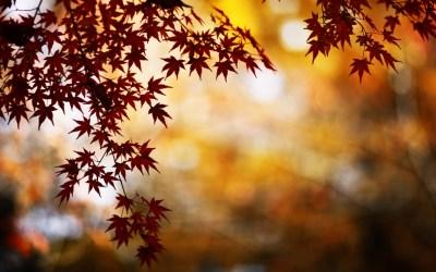 Red Foliage Bokeh Mac Wallpaper Download Free Mac Wallpapers Wallpaper Desktop Retina   Free ...