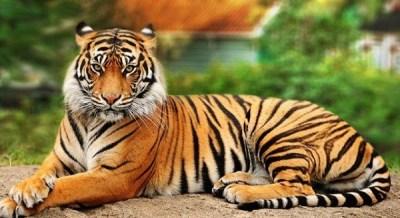 Maiores felinos do mundo - Biologia - Colégio Web