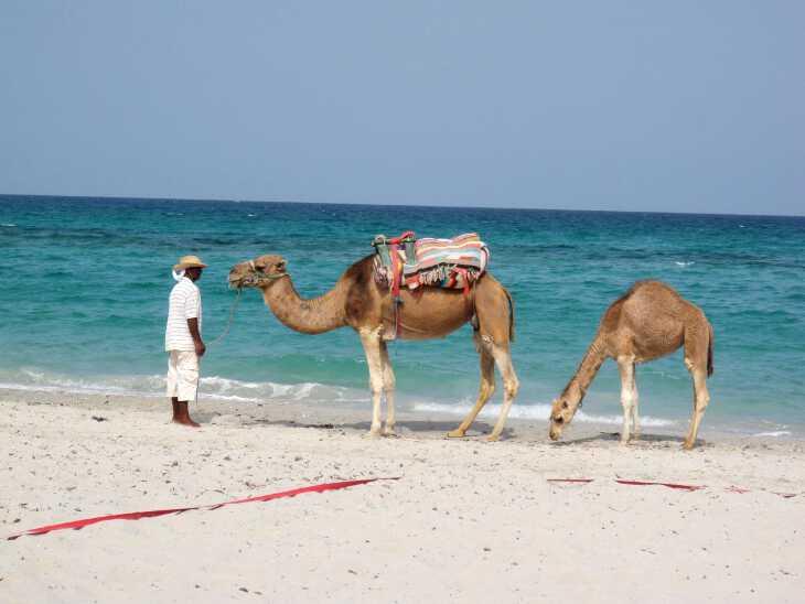 отдых в джербе тунис в сентябре 2019