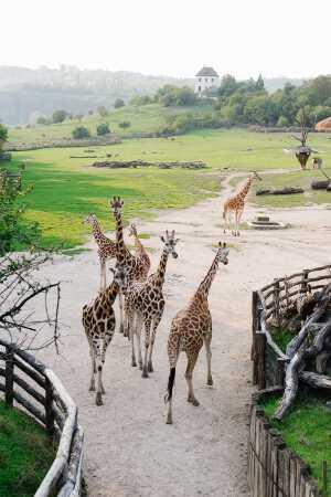 Пражский зоопарк Что посмотреть и куда сходить в Праге Что посмотреть и куда сходить в Праге: ТОП-25 достопримечательностей zoo