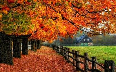 Autumn Wallpaper Examples for Your Desktop Background