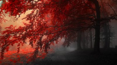 171 Nature Wallpaper Examples For Your Desktop Background