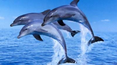 Dolphins Jumping Clipart Wallpaper. Desktop Background
