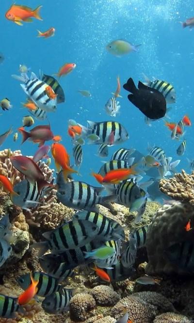 Under Sea Wallpapers Hd Desktop Background