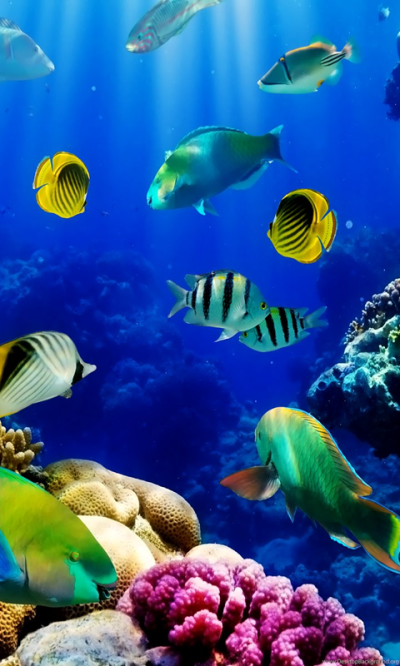3d Live Fish Wallpapers Fish Tank Live Wallpaper. Fish Tank 3d Live ... Desktop Background