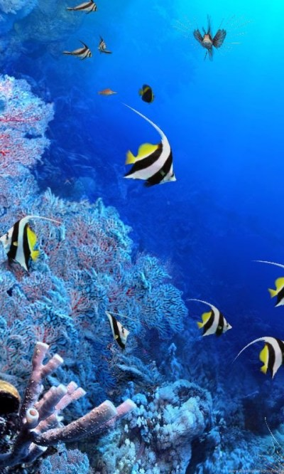 3d Aquarium Wallpapers Free Download. Download Fish Tank 3d Live ... Desktop Background