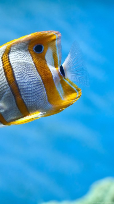 Cool Fish Backgrounds Wallpapers Zone Desktop Background