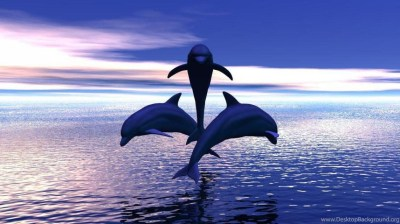 3 DOLPHINS JUMPING OUT OF THE WATER WALLPAPER ( Desktop Background