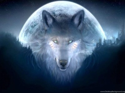 Cool Wolf Backgrounds 11071 Hd Wallpapers In Animals Imagesci Com ... Desktop Background