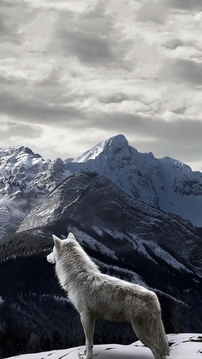 iPhone 5 Animal/Wolf Wallpapers ID: 253660 Desktop Background